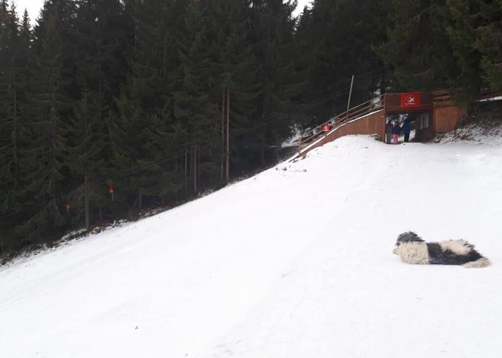 Pârtia de schi Băișoara, jud. Cluj - Blog de calatorii - ZIGZAG PE HARTĂ - 25917 84138 2