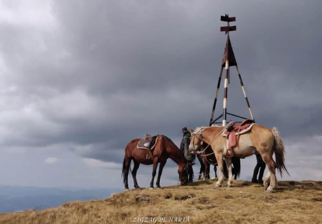 Vârful Parângul Mare (2519 m), Vârful Cârja (2405 m) și Vârful Parângul Mic (2074 m) - Blog de calatorii - ZIGZAG PE HARTĂ - 25917 96624 25