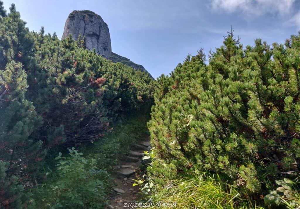 Vârful Toaca 1904 m. din M-ții Ceahlău - Blog de calatorii - ZIGZAG PE HARTĂ - 25917 98150 18