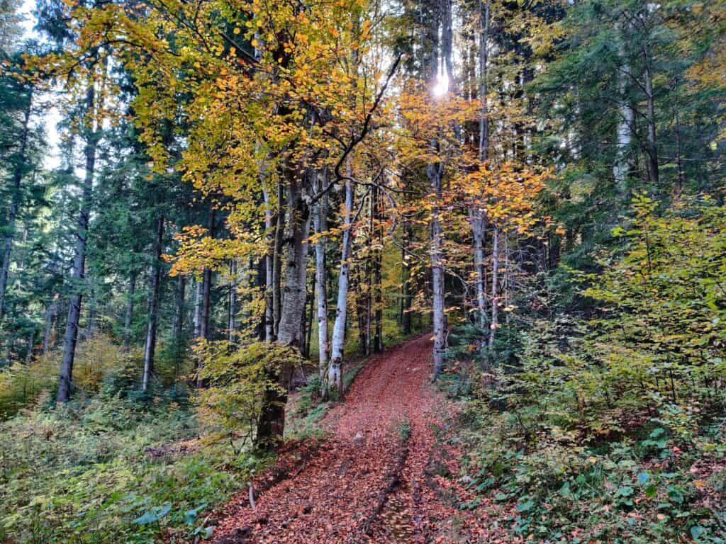 """Vârful Piatra Ghilcoș (1376 metri) din Lacul Roșu - Traseul """"Belvedere Ghilcoș"""" - Blog de calatorii - ZIGZAG PE HARTĂ - IMG 20201024 114545 01"""
