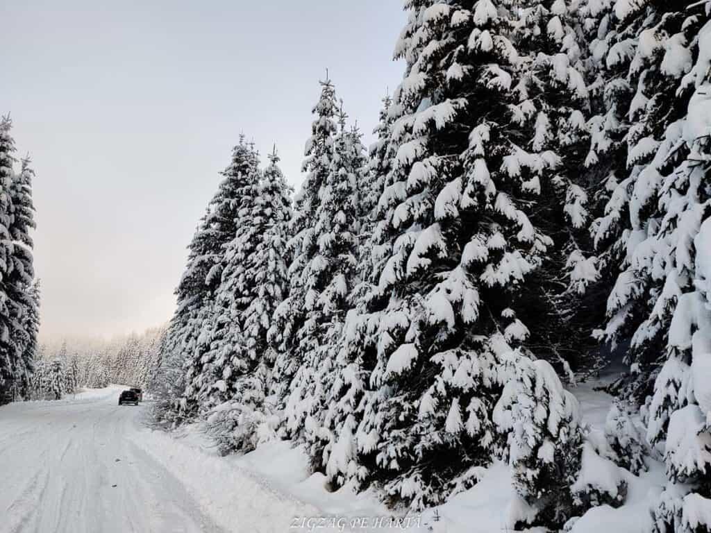 Domeniul schiabil Șureanu - Blog de calatorii - ZIGZAG PE HARTĂ - IMG 20210109 085444 1