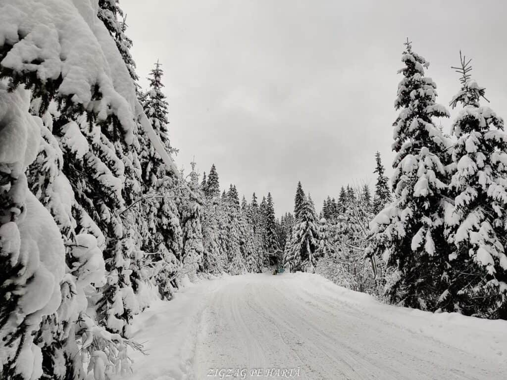 Domeniul schiabil Șureanu - Blog de calatorii - ZIGZAG PE HARTĂ - IMG 20210110 154536