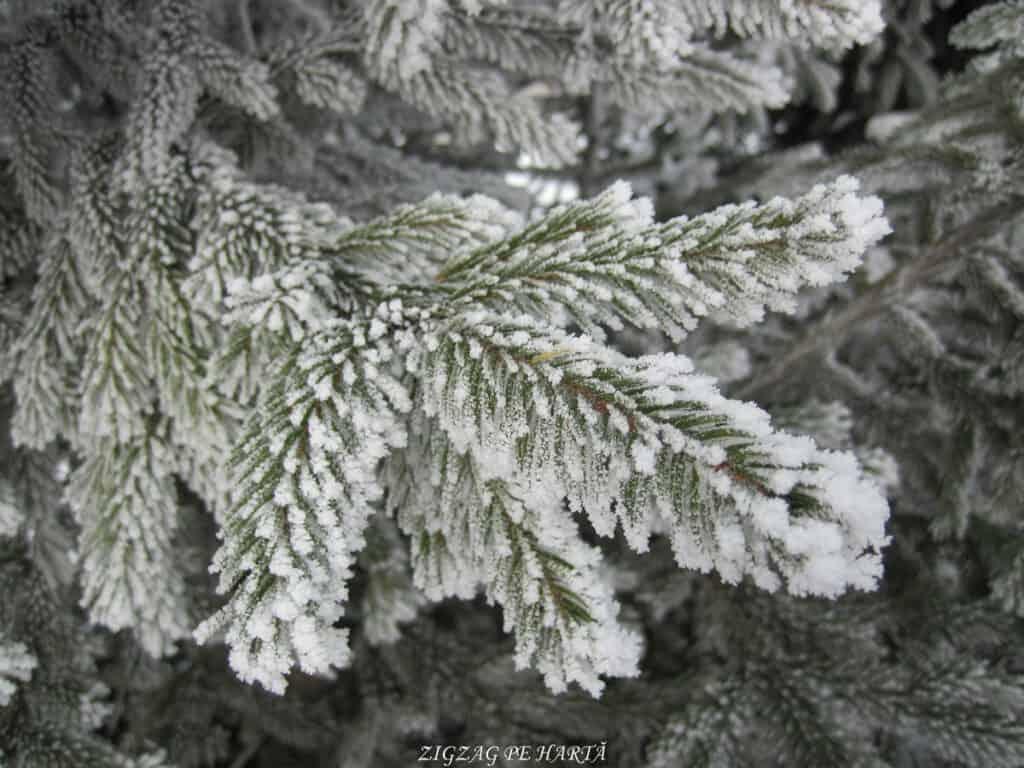 Pârtiile de schi din Toplița - Blog de calatorii - ZIGZAG PE HARTĂ - IMG 9947