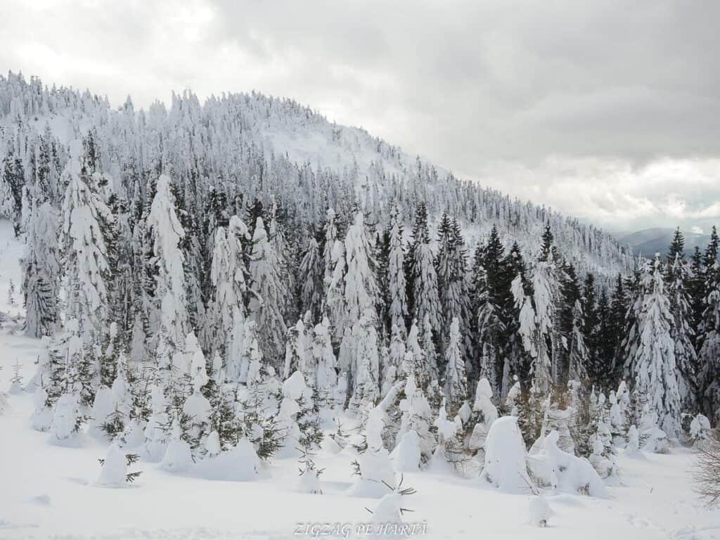 Domeniul schiabil Poiana Brașov, schi în trei zile - Blog de calatorii - ZIGZAG PE HARTĂ - OI000149 1