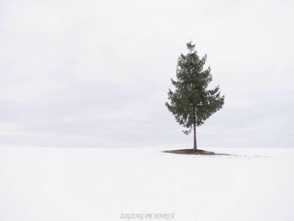 Pârtiile de schi din Toplița - Blog de calatorii - ZIGZAG PE HARTĂ - OI000212 02