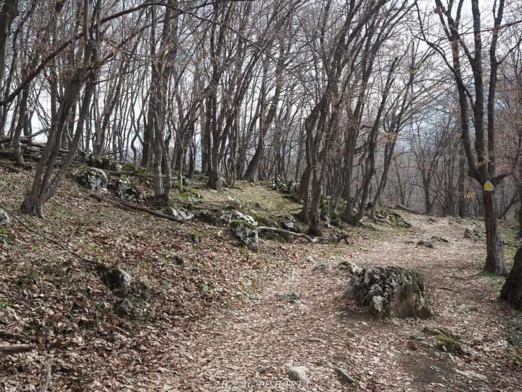Circuit Vf. Ciucarul Mare - Blog de calatorii - ZIGZAG PE HARTĂ - ADL50153