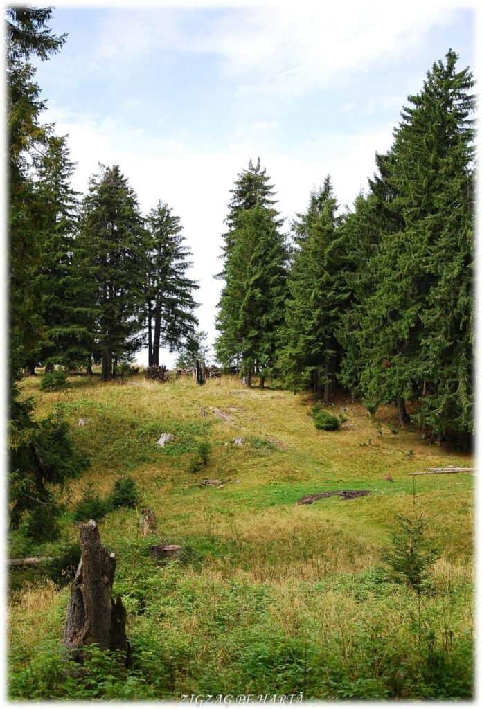 Scaunul Domnului – 1381 m - Blog de calatorii - ZIGZAG PE HARTĂ - DSC 4006
