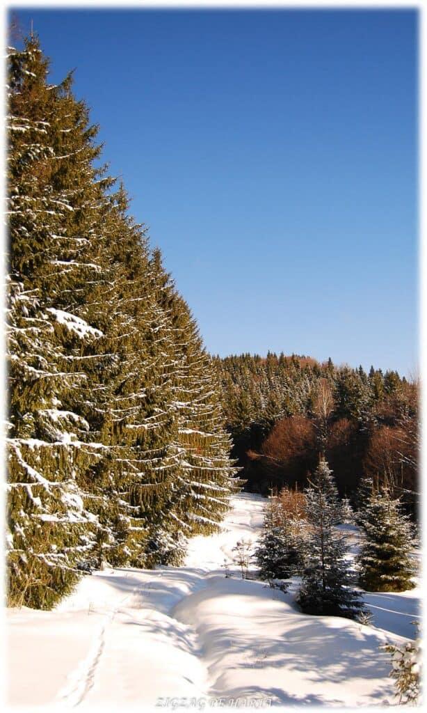 Scaunul Domnului – 1381 m - Blog de calatorii - ZIGZAG PE HARTĂ - DSC 5384