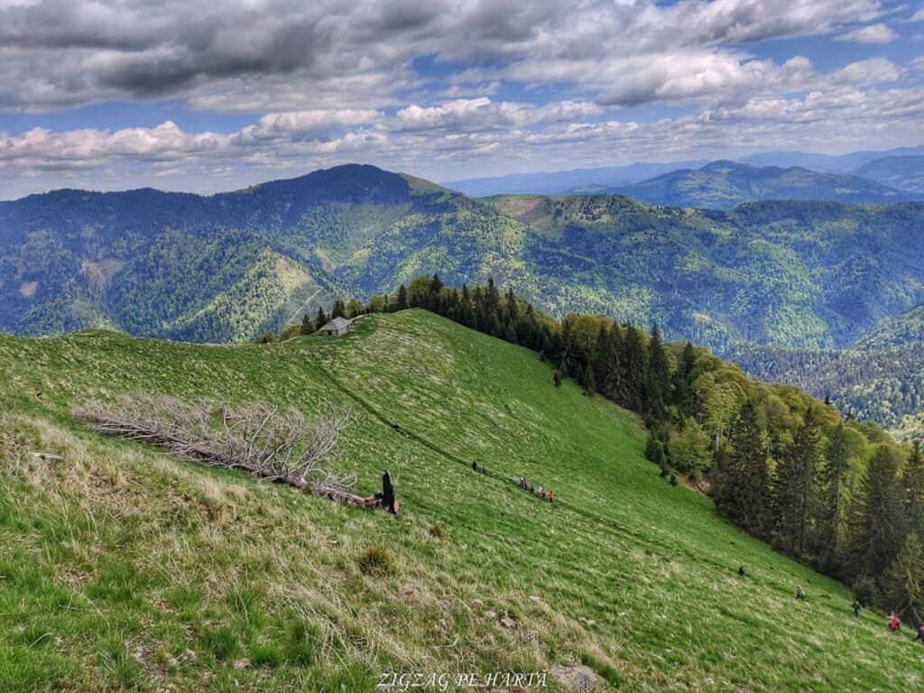 Poiana cu narcise din munții Rodnei - Blog de calatorii - ZIGZAG PE HARTĂ - IMG 20200523 145706 01