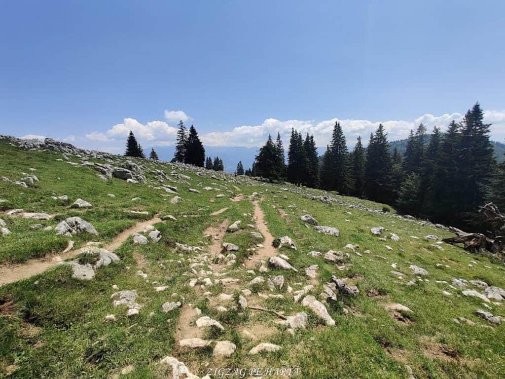 Traseu prin Prăpăstiile Zărneștilor până la Cabana Curmătura, din Parcul Național Piatra Craiului - Blog de calatorii - ZIGZAG PE HARTĂ - IMG 20200627 135843