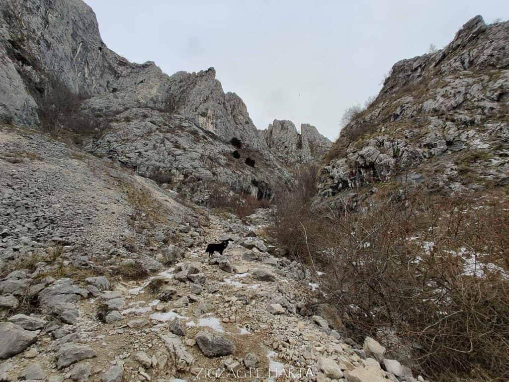 Piatra Secuiului 1128m - Blog de calatorii - ZIGZAG PE HARTĂ - IMG 20210123 094405