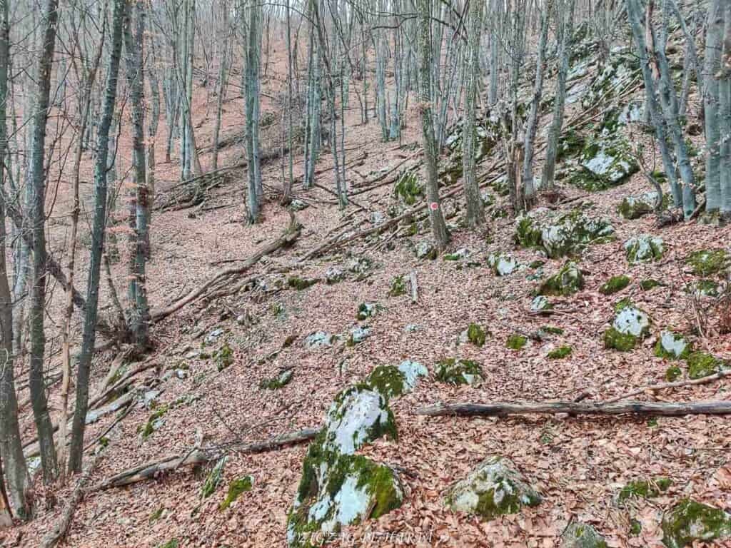 Drumeție pe versantul drept al Cheilor Vălișoarei - Blog de calatorii - ZIGZAG PE HARTĂ - IMG 20210206 123208 01