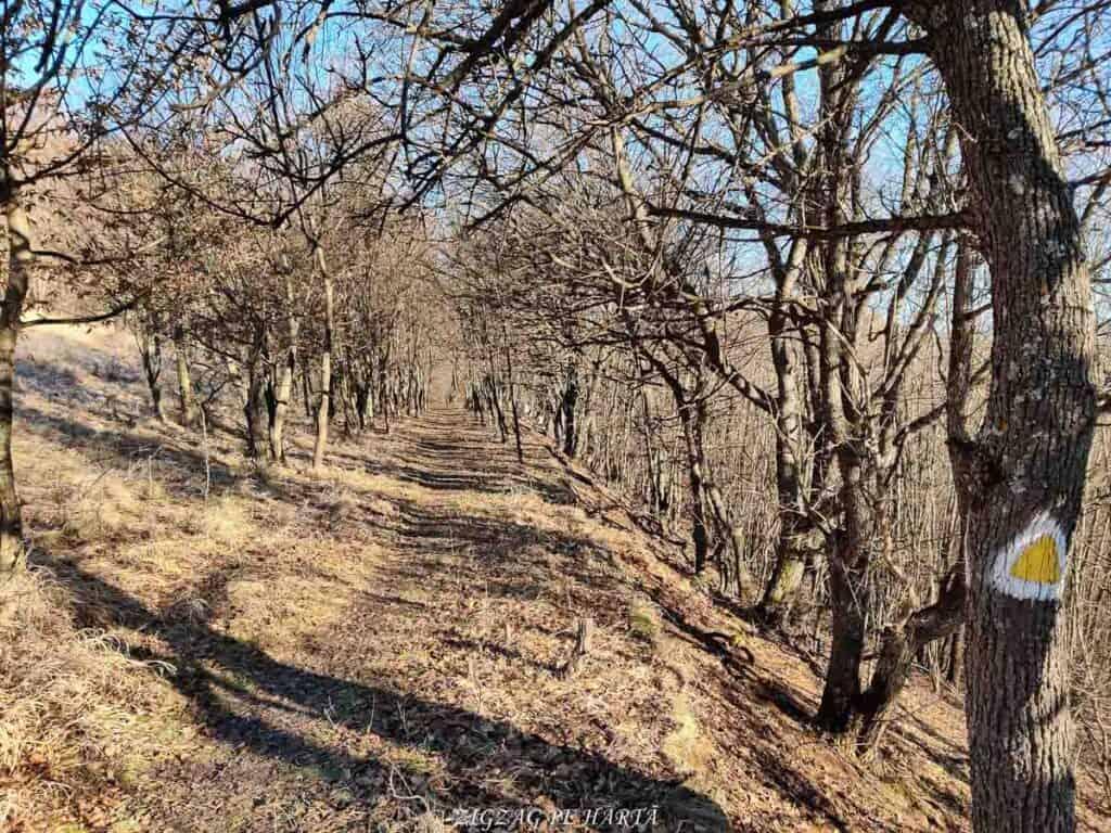 Vârful Berț și vârful Chișberț, traseu pe la minele de fier medievale de la Rimetea - Blog de calatorii - ZIGZAG PE HARTĂ - IMG 20210102 095017