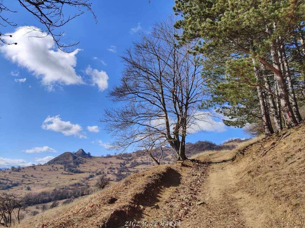 Vârful Ardașcheia 1250 metri din Munții Trascăului, jud. Alba - Blog de calatorii - ZIGZAG PE HARTĂ - IMG 20210306 103550 01