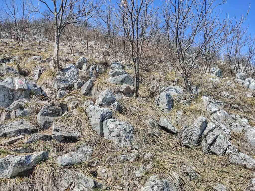 Piatra Cetii 1233m - Blog de calatorii - ZIGZAG PE HARTĂ - IMG 20210327 125620 01
