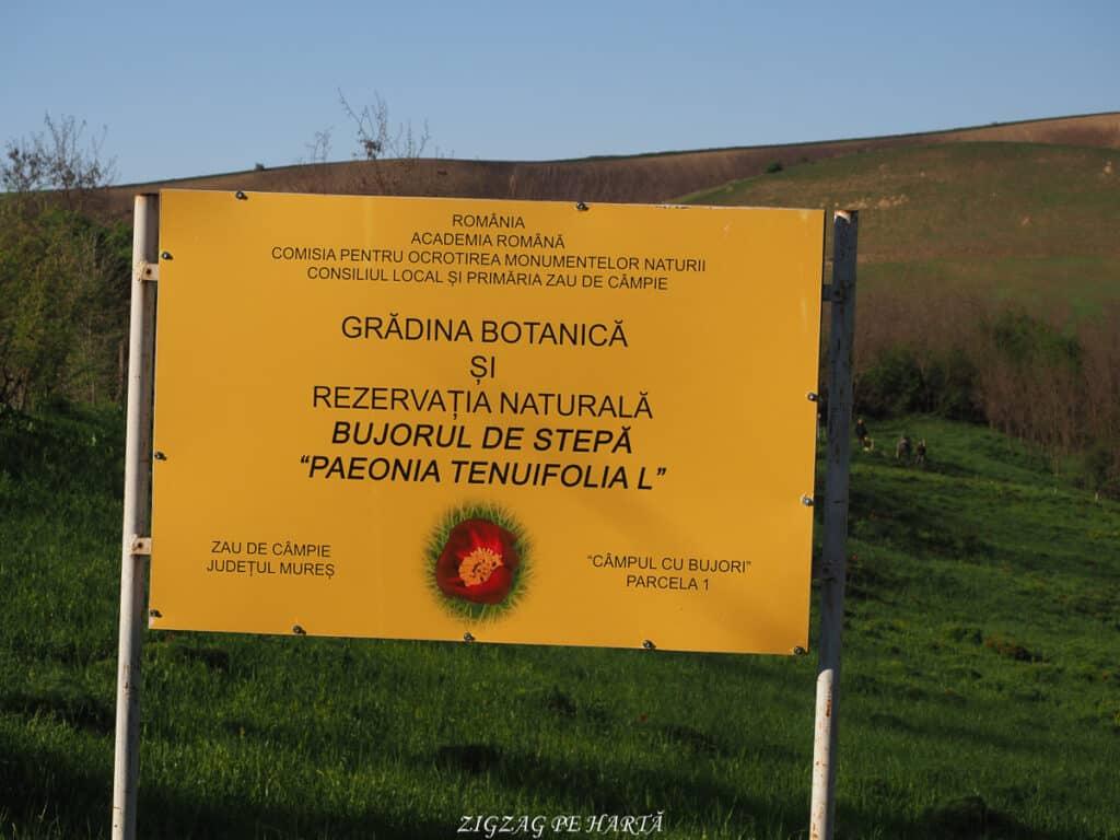 Bujorul de stepă de la Zau de Câmpie - Blog de calatorii - ZIGZAG PE HARTĂ - ADL40777