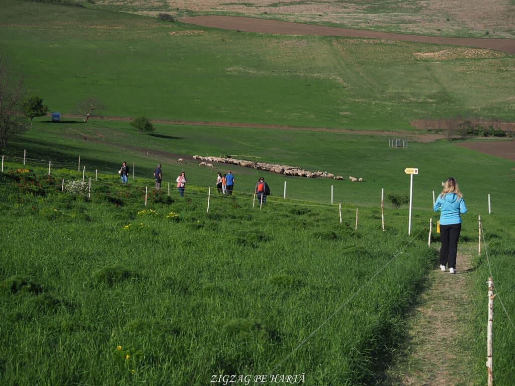 Bujorul de stepă de la Zau de Câmpie - Blog de calatorii - ZIGZAG PE HARTĂ - ADL40802