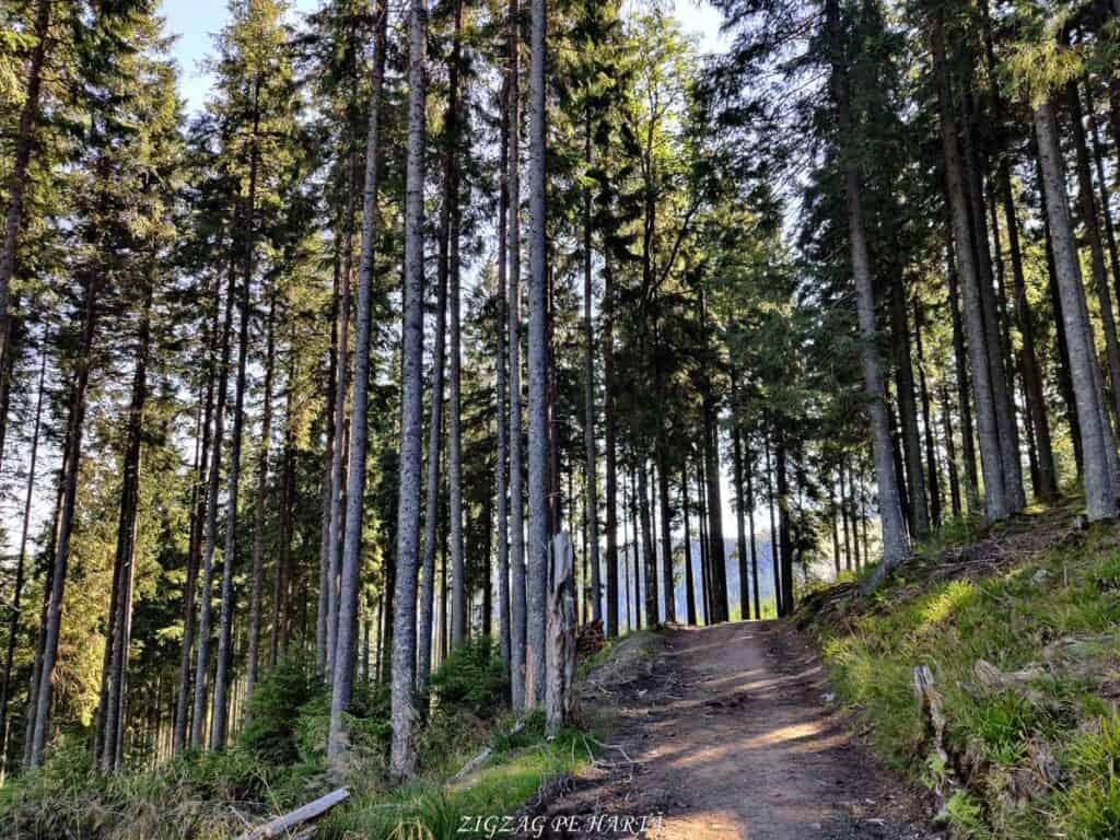 Vârful Giumalău 1858 metri - Blog de calatorii - ZIGZAG PE HARTĂ - IMG 20200806 095550