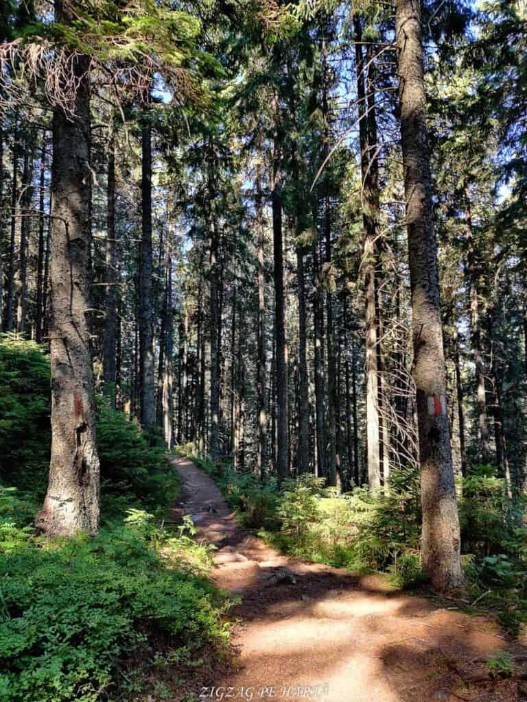 Vârful Giumalău 1858 metri - Blog de calatorii - ZIGZAG PE HARTĂ - IMG 20200806 101052