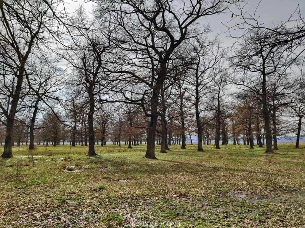 Laleaua pestriță din Orheiul Bistriței - Blog de calatorii - ZIGZAG PE HARTĂ - IMG 20210417 161122 01