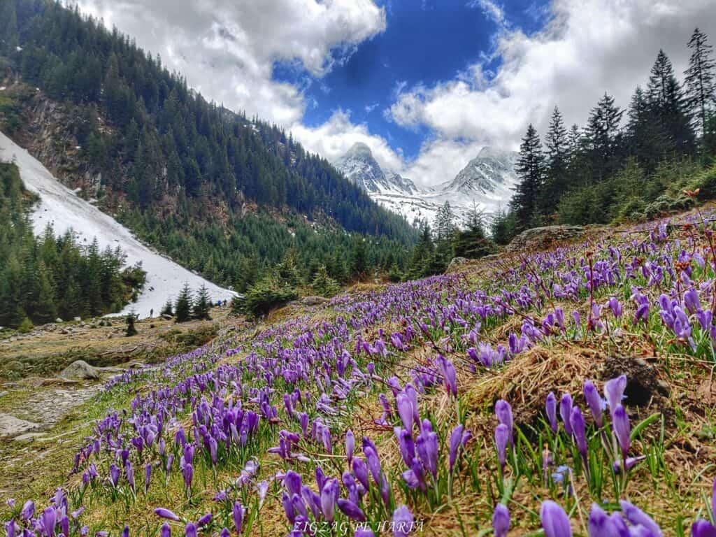 Traseul spre Cabana Valea Sâmbetei din Făgăraș - Blog de calatorii - ZIGZAG PE HARTĂ - IMG 20210508 131308 01