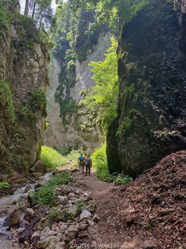 Canionul 7 Scări din Munții Piatra Mare - Blog de calatorii - ZIGZAG PE HARTĂ - IMG 20190617 123335