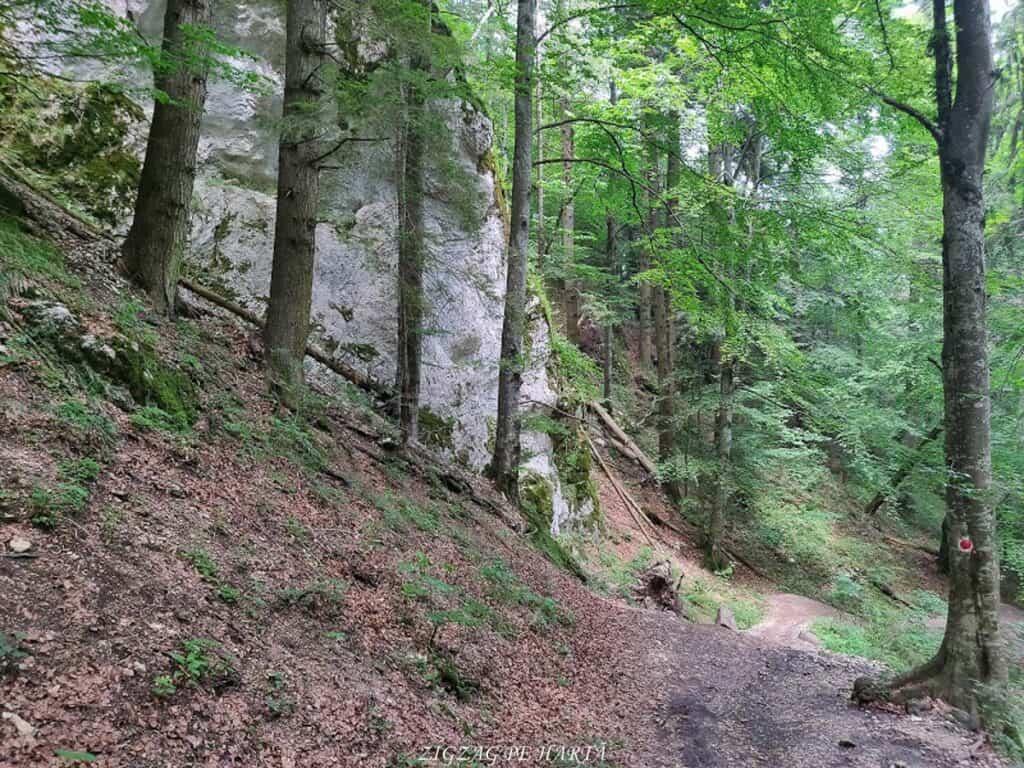Canionul 7 Scări din Munții Piatra Mare - Blog de calatorii - ZIGZAG PE HARTĂ - IMG 20190617 125859