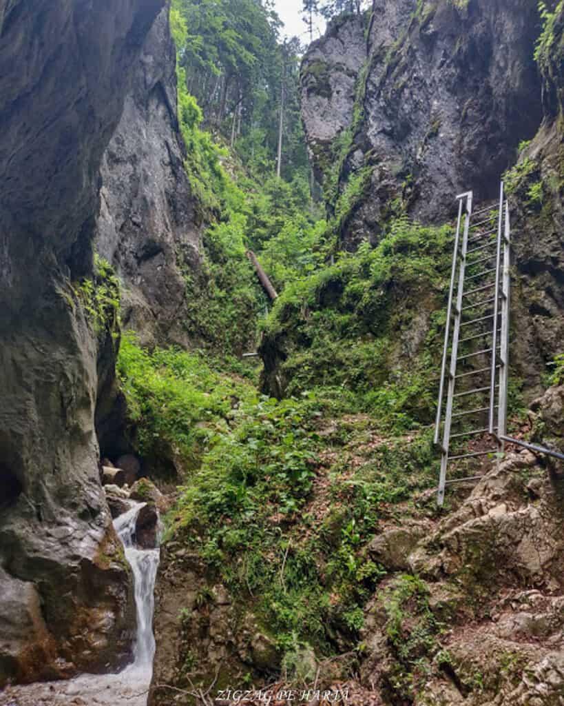 Canionul 7 Scări din Munții Piatra Mare - Blog de calatorii - ZIGZAG PE HARTĂ - IMG 20190617 201749 676