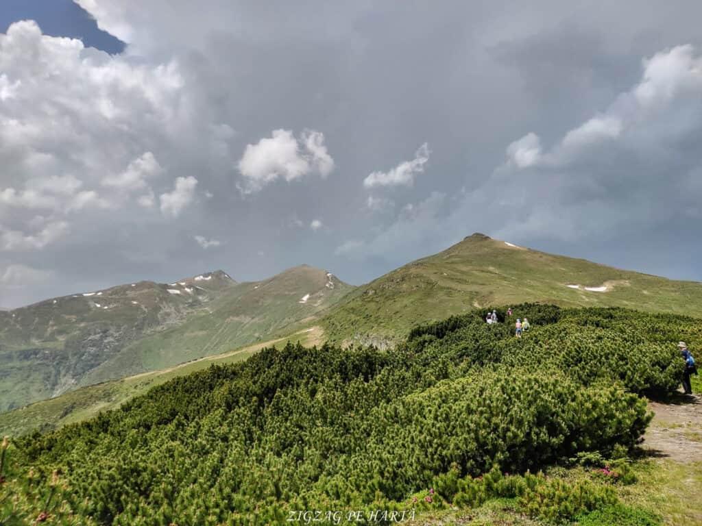 Rododendroni în Munții Rodnei - Blog de calatorii - ZIGZAG PE HARTĂ - IMG 20210703 WA0007 01