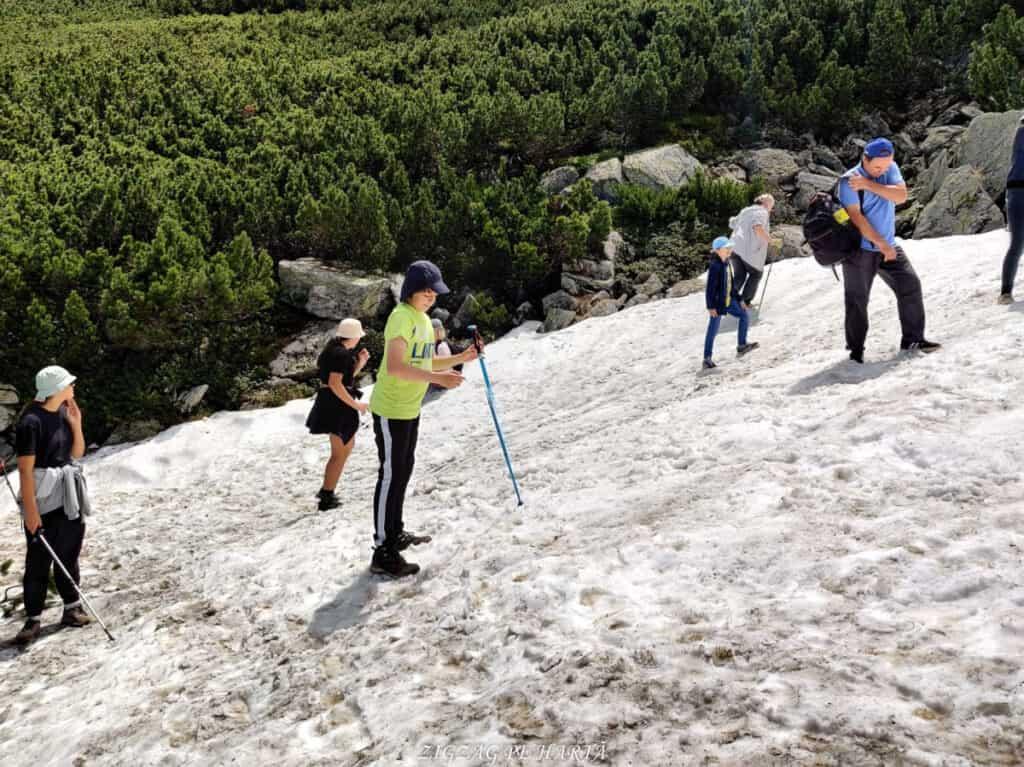 Rododendroni în Munții Rodnei - Blog de calatorii - ZIGZAG PE HARTĂ - IMG 20210703 WA0034 01