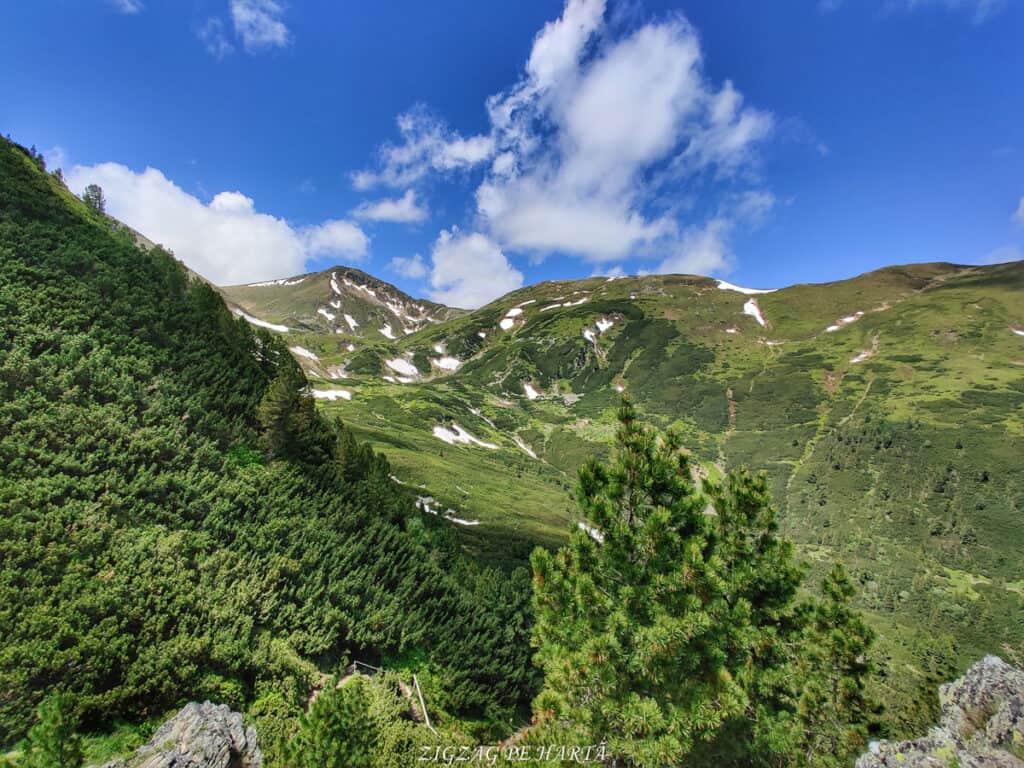 Rododendroni în Munții Rodnei - Blog de calatorii - ZIGZAG PE HARTĂ - IMG 20210626 123442 01