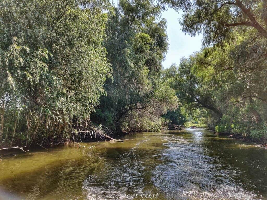 Delta Dunării – plimbare cu barca pe Brațul Sfântul Gheorghe - Blog de calatorii - ZIGZAG PE HARTĂ - IMG 20210722 114741 01