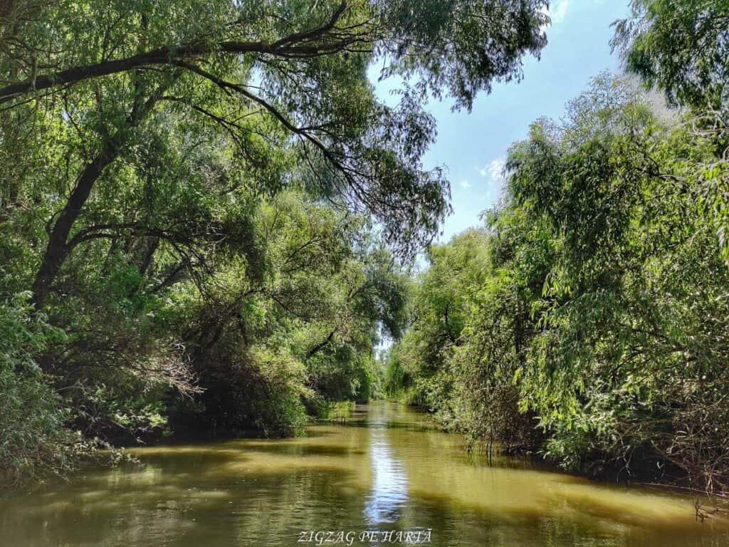 Delta Dunării – plimbare cu barca pe Brațul Sfântul Gheorghe - Blog de calatorii - ZIGZAG PE HARTĂ - IMG 20210722 121156 01