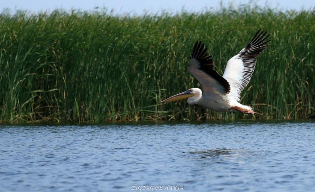 Delta Dunării – plimbare cu barca pe Brațul Sfântul Gheorghe - Blog de calatorii - ZIGZAG PE HARTĂ - IMG 4258