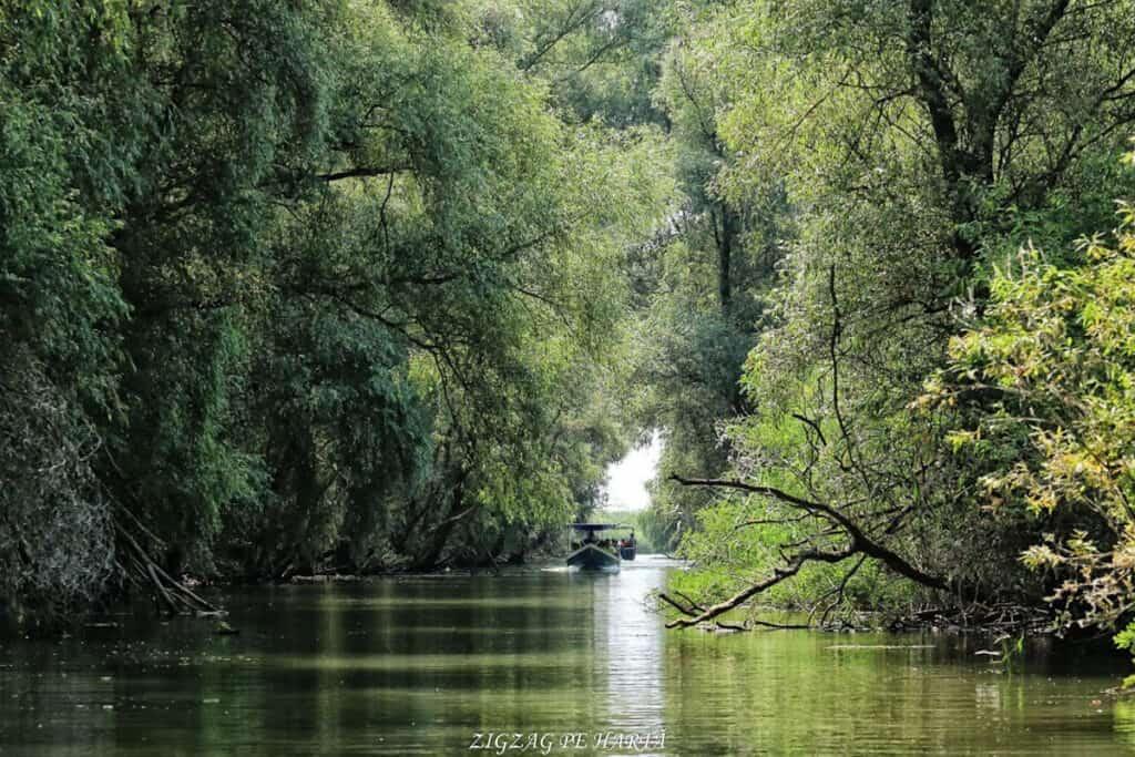 Delta Dunării – plimbare cu barca pe Brațul Sfântul Gheorghe - Blog de calatorii - ZIGZAG PE HARTĂ - IMG 4599