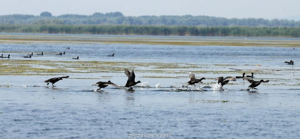 Delta Dunării – plimbare cu barca pe Brațul Sfântul Gheorghe - Blog de calatorii - ZIGZAG PE HARTĂ - IMG 4764