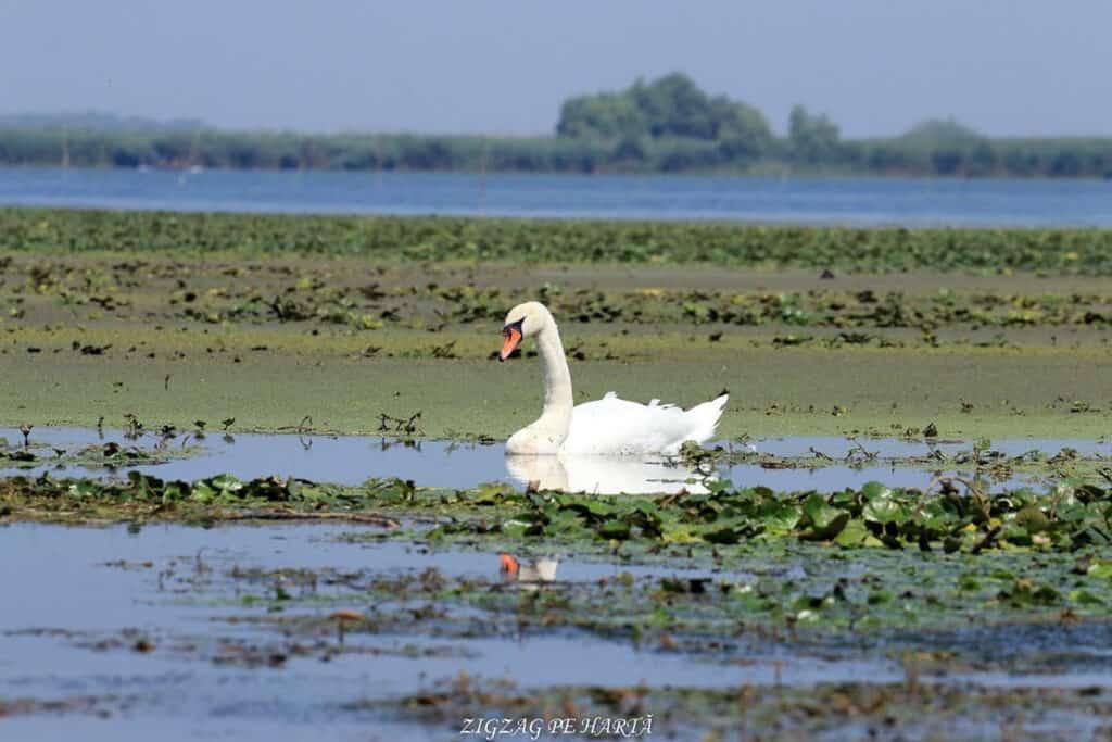 Delta Dunării – plimbare cu barca pe Brațul Sfântul Gheorghe - Blog de calatorii - ZIGZAG PE HARTĂ - IMG 4834